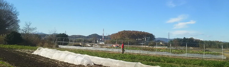 有機農法の井伊農場/埼玉