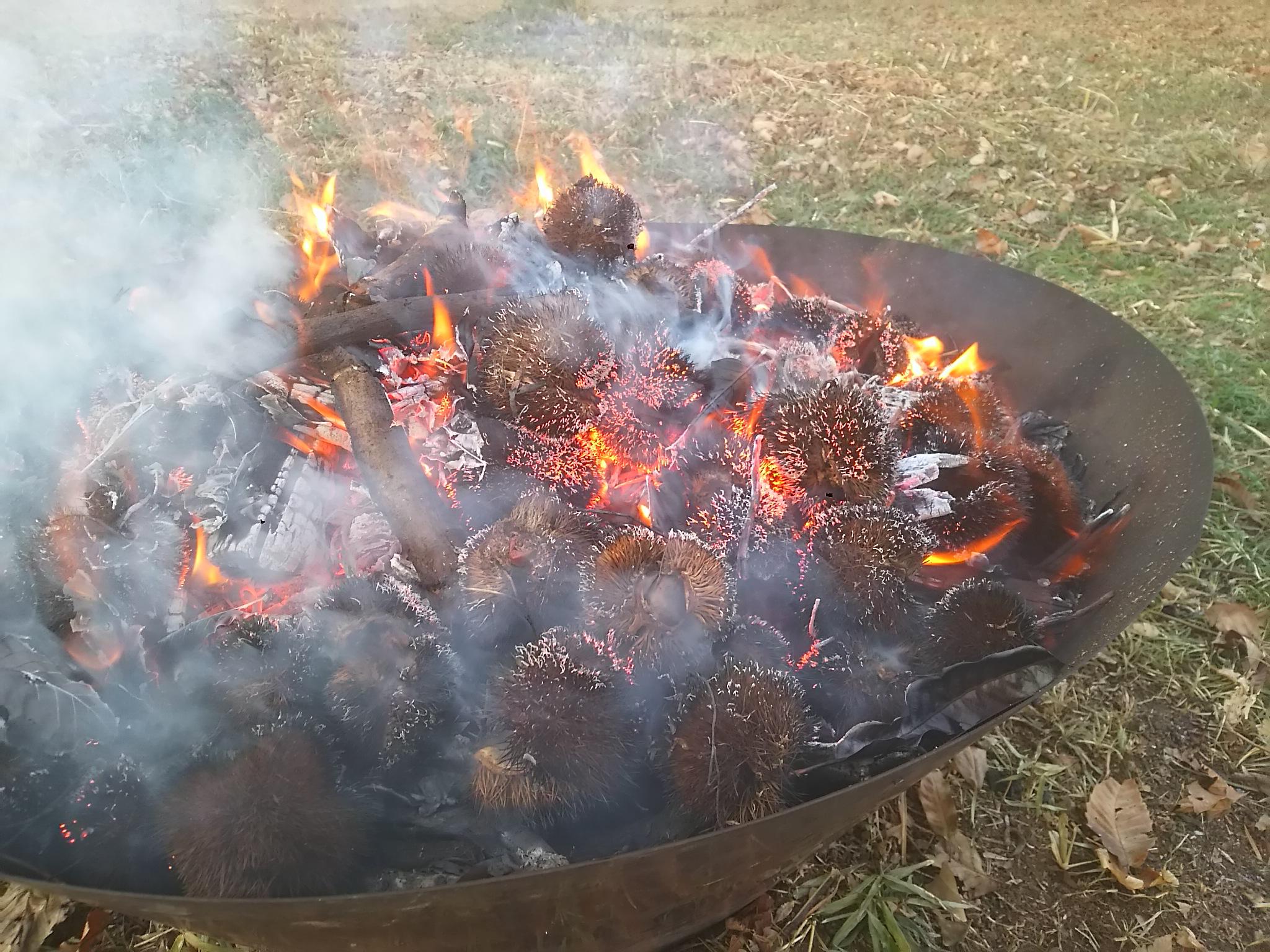 栗の毬(いが)で炭焼き