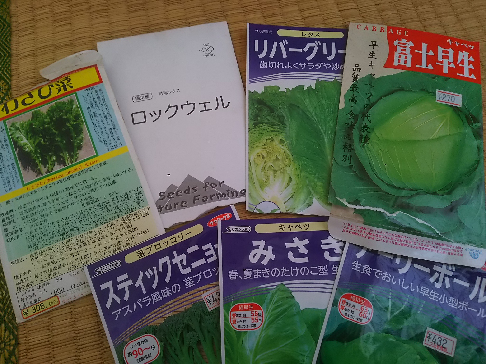 春野菜の種まき