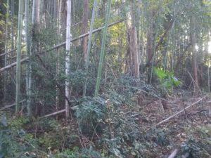 管理が放棄されて荒れた竹林