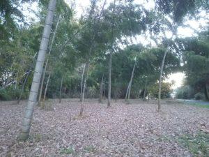 手入れされた美しい竹林