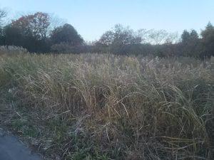 耕作放棄されて草が生い茂る畑