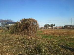 荒地再生炭焼きプロジェクト