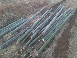 踏み込み温床の枠につかう竹の切り出し