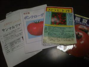 今年も栽培ポンテローザトマト