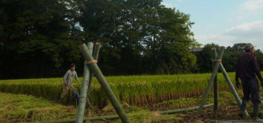 はざ掛け用の竹の脚