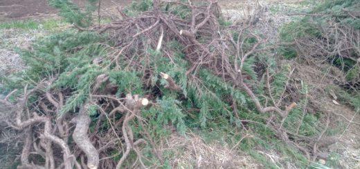堆肥化する剪定枝